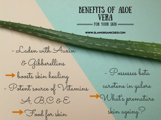 Amazing Skin Benefits of Aloe Vera Gel/Juice For Skin, Homemade Face Mask, Beauty Tips, Face Mask, Best Face Mask, DIY Face Mask, Homemade Facial, Indian Beauty Blog, Glamorganicdesi, Indian Makeup Blog, Skin Care Tips, Hair Care Tips, Organic Face Mask, Hydrating Face Mask, Moisturizing Face Mask